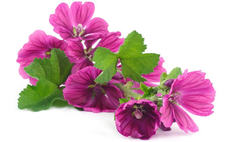 Fleurs à planter pour chaque saison